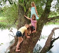 Kletternde Kinder am Baum.